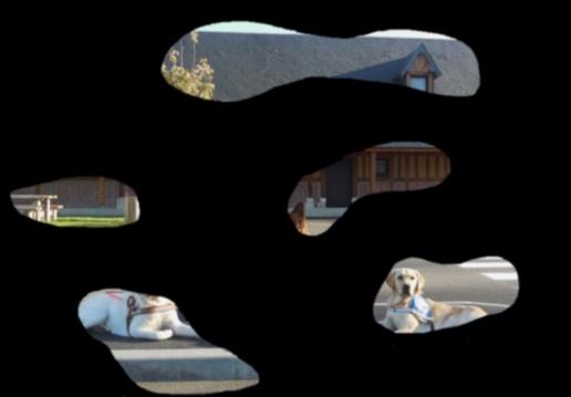 Vision parcellaire - différentes formes de déficiences visuelles